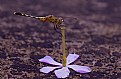 Picture Title - dragonfly