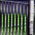 Picture Title - Just a Fence and a Tree