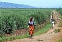Picture Title - Rwandan Peasants