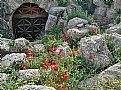 Picture Title - Rocks & Wild Flowers