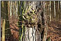 Picture Title - tree demonface
