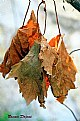 Picture Title - Colors of Autumn