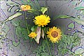 Picture Title - Yellow Daisies