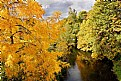 Picture Title - Golden Fall