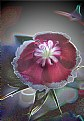 Picture Title - Backlit Flower