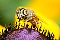 Picture Title - macro 28
