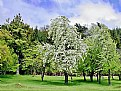 Picture Title - Trees