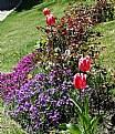 Picture Title - Garden