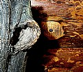 Picture Title - Wood not listen