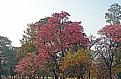 Picture Title - Park & Colour