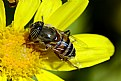 Picture Title - macro 32