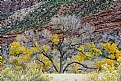 Picture Title - When fall comes to Zion