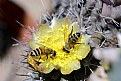 Picture Title - macro 33