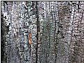Picture Title - burned wood