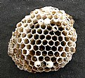 Picture Title - Wasp Nest