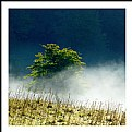 Picture Title - **A simple Tree  II**