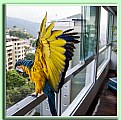 Picture Title - macaw visiting my window