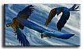 Picture Title - macaws