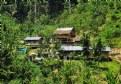 Picture Title - Jungle settlement