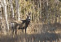 Picture Title - Buck in clearing 2