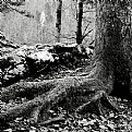 Picture Title - roots
