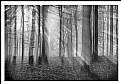 Picture Title - **Light& Mist**