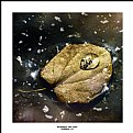 Picture Title - Raindrop and Leaf