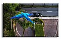 Picture Title - macaw -leaving my apartment
