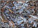 Picture Title - frosty leaves