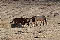 """Picture Title - """"Wild Horses"""""""