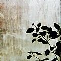 Picture Title - silhouette