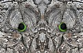 Picture Title - Tree Eyes 4