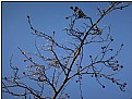 Picture Title - winter buds