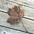 Picture Title - old leaf