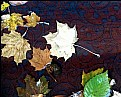 Picture Title - Watery Leaves