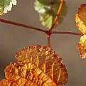 Picture Title - Autumn Sunlight