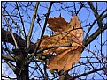 Picture Title - last leaf still