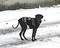 Picture Title - Dog Coat