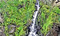 Picture Title - Waterfall & Greenery