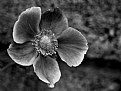Picture Title - Flower