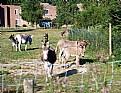 Picture Title - Donkey sanctuary