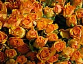 Picture Title - yellow roses