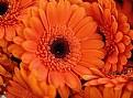 Picture Title - Orange