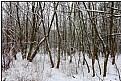 Picture Title - winter grove