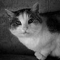 Picture Title - Schrödinger's cat