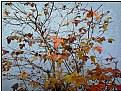 Picture Title - fall bush