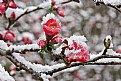 Picture Title - fire bush and ice