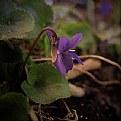 Picture Title - violet
