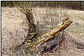 Picture Title - tree trunks