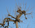 Picture Title - Gnarly Tree